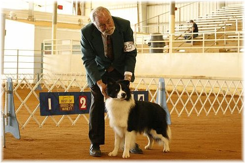 Wilsong Border Collies - Braeyden winning a major