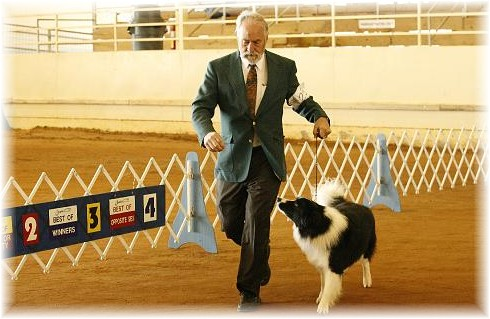 Norlee Reece showing Braeyden of Wilsong Border Collies