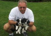 the 1st day Rowdy & Glory - Wilsong Border Collies