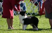 Julee at BCSA 2007 - Wilsong Border Collies
