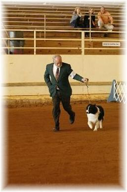Wilsong Border Collies - Braeyden in Pensacola
