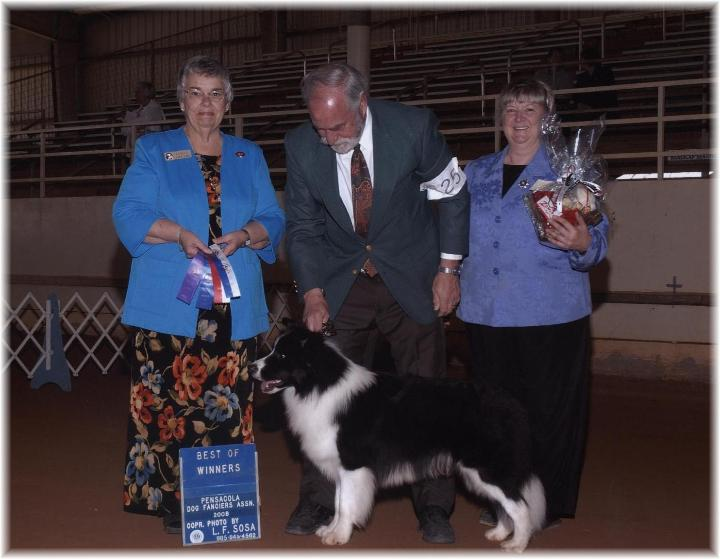 Wilsong Border Collies Braeyden Pensacola 2008