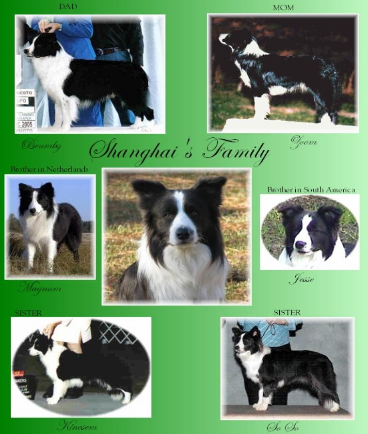 Wilsong Border Collies - Show Quality Border Collies